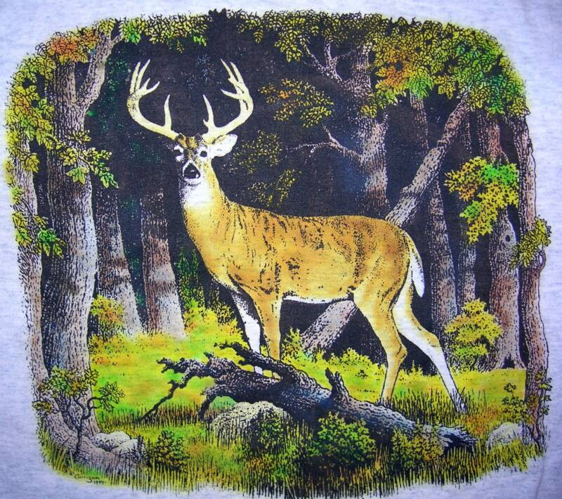 Deer. in color, T-shirt design © David Carrigan